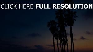 himmel palmen nacht