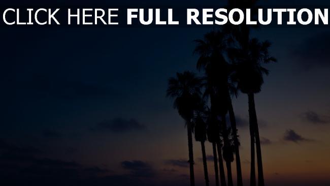 hd hintergrundbilder himmel palmen nacht