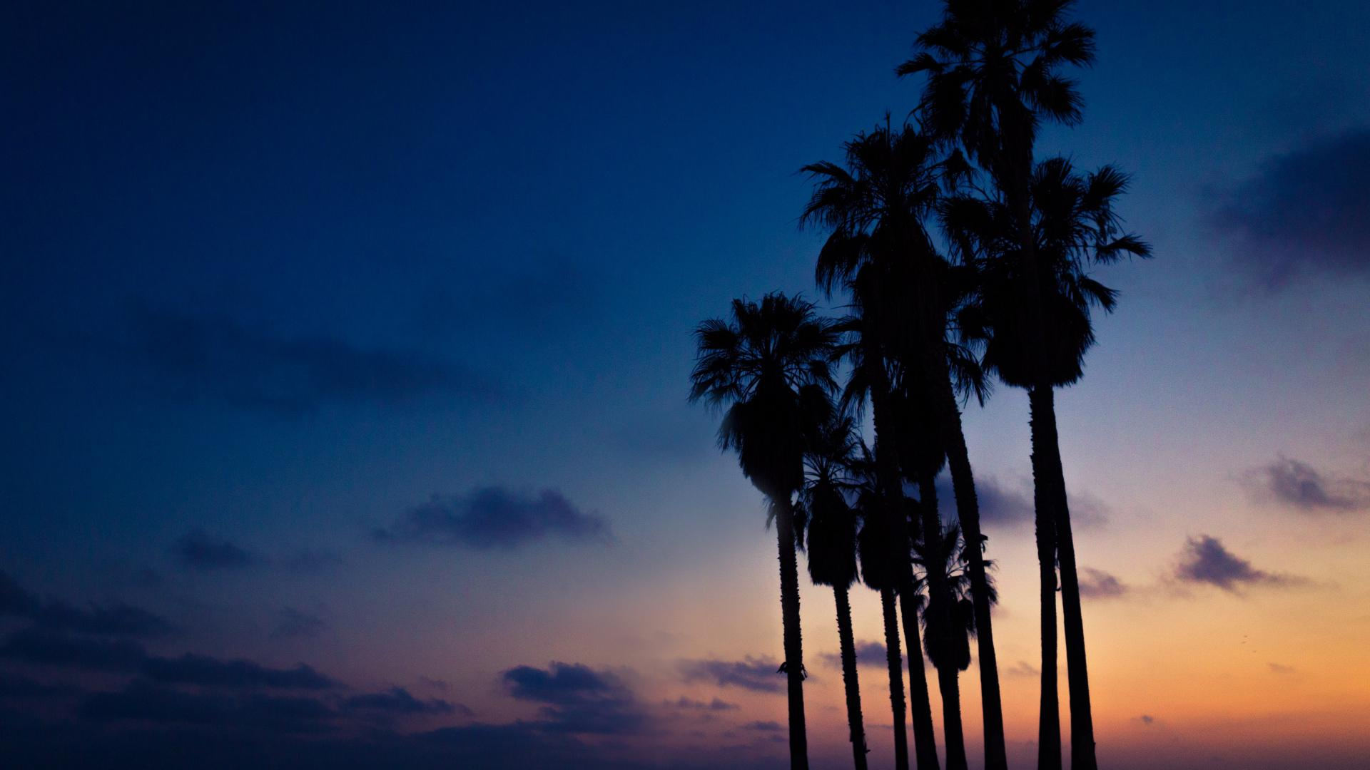 hd hintergrundbilder himmel palmen nacht 1920x1080