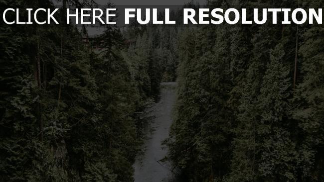 hd hintergrundbilder bäume fluss strom