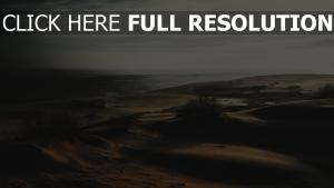 gras sand wüste