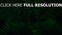 blätter pflanze grün farn