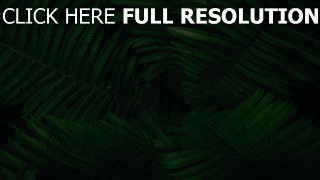 hd hintergrundbilder blätter pflanze grün farn