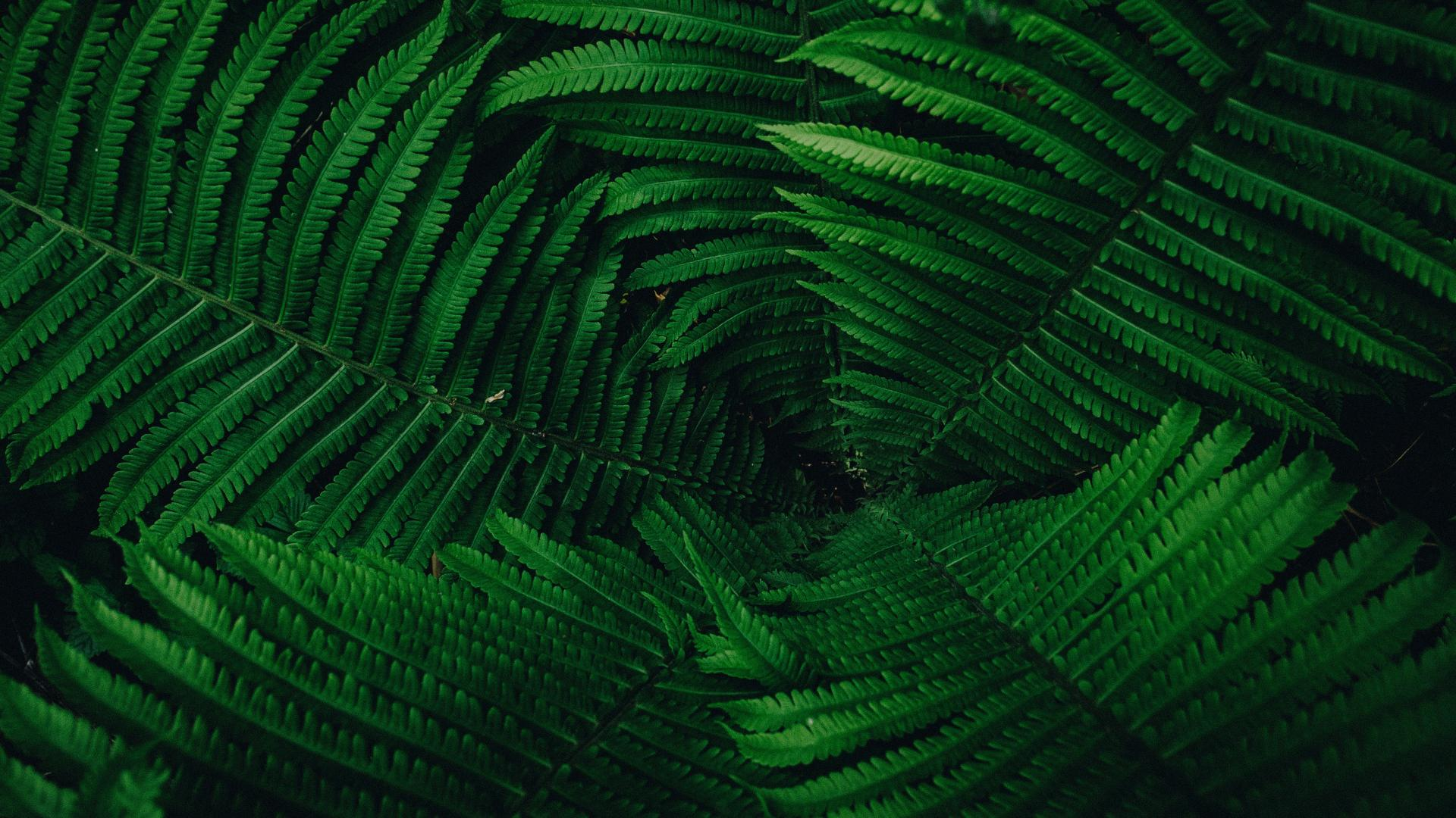 Hintergrund desktop grun