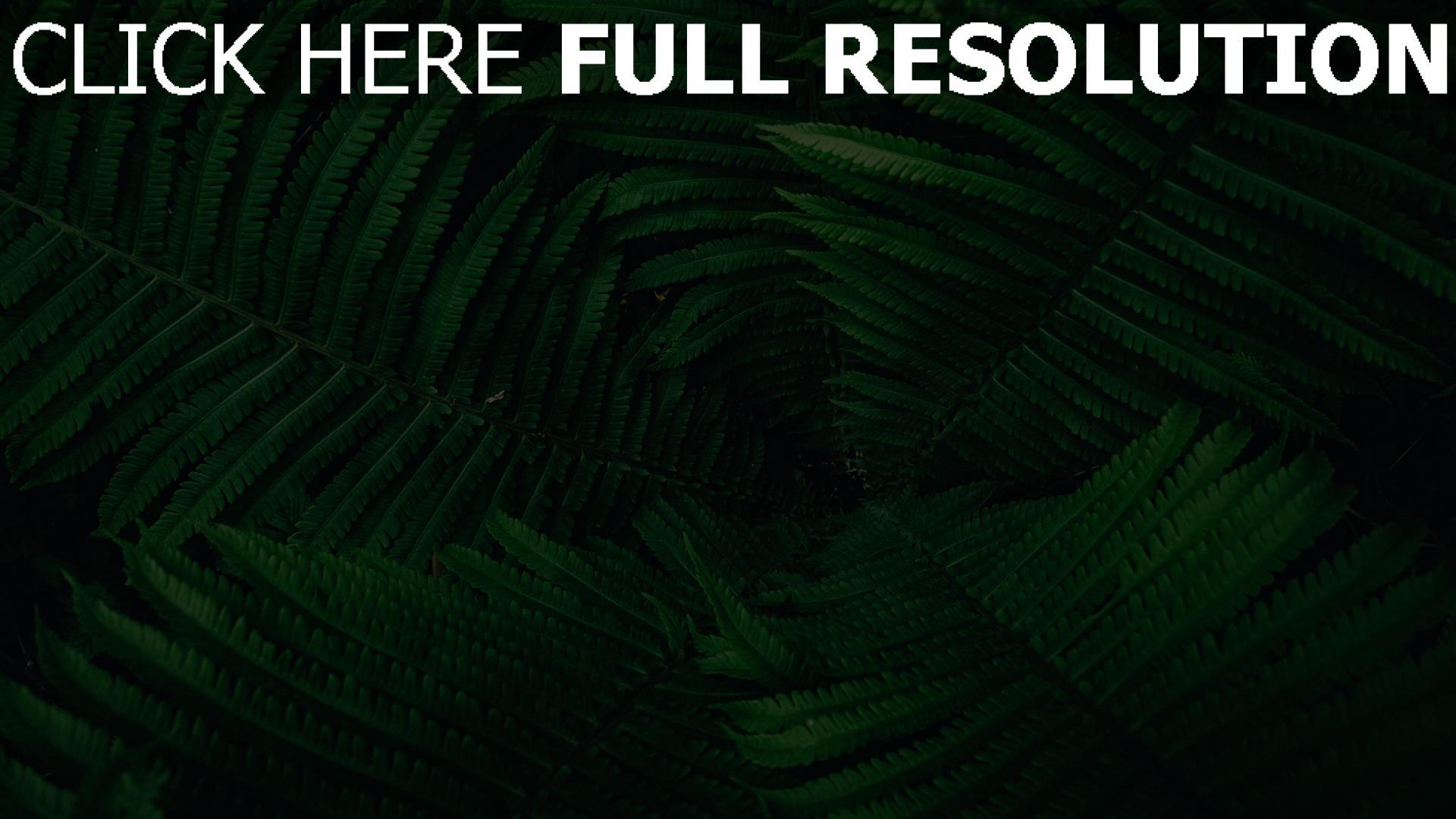 hd hintergrundbilder blätter pflanze grün farn 1920x1080
