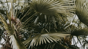 blätter palmen büschen pflanzen