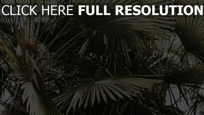 hd hintergrundbilder blätter palmen büschen pflanzen