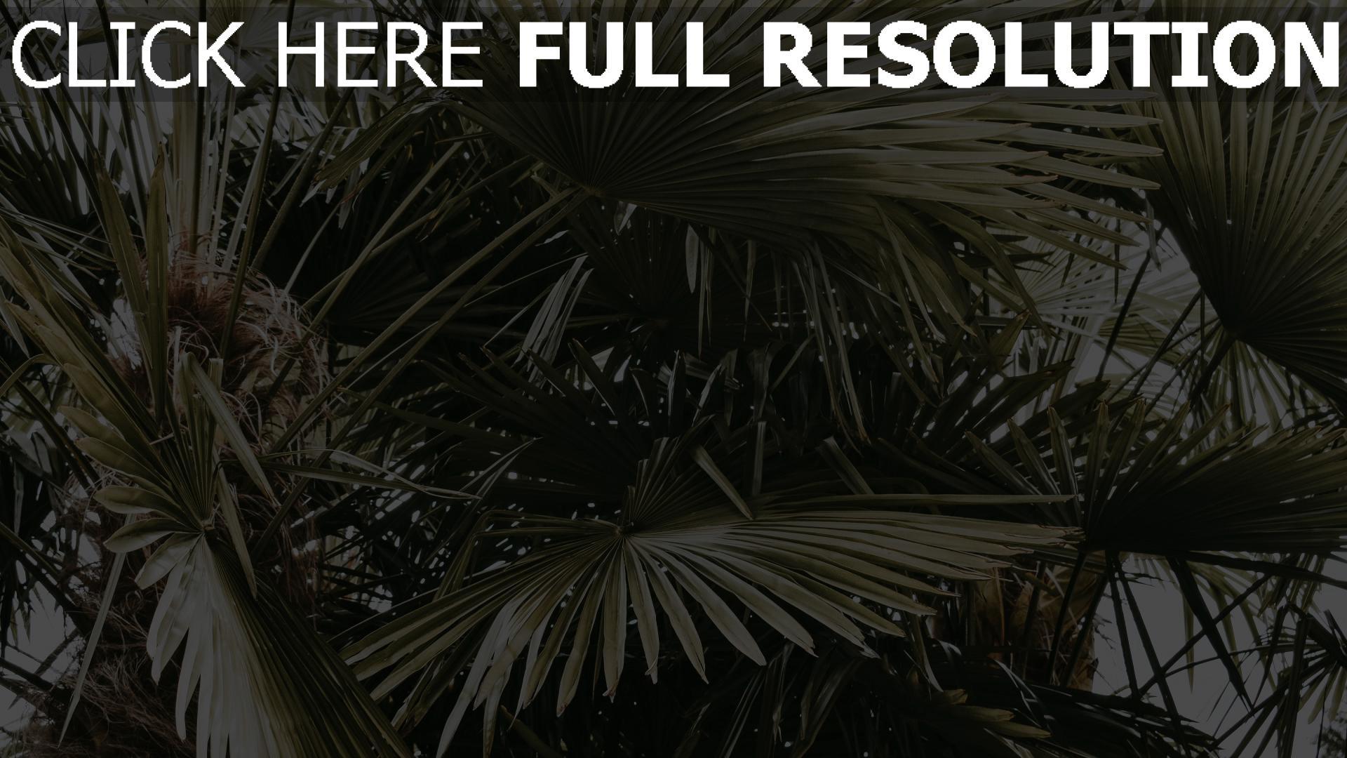 hd hintergrundbilder blätter palmen büschen pflanzen 1920x1080