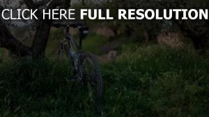 bäume gras fahrrad