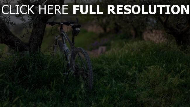 hd hintergrundbilder bäume gras fahrrad