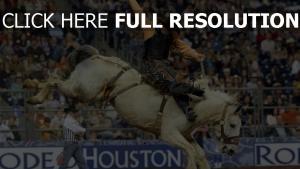 houston livestock show and rodeo houston rodeo pferd