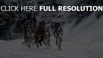 schneesport rennsport hund