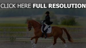 pferdesport pferd reiter