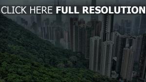 hongkong großstadt häuser hochhäuser
