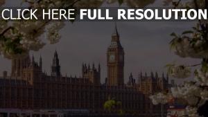 blüte frühling häuser des parlaments london