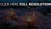 frühling brücken abend blume park beleuchtung nacht stadt