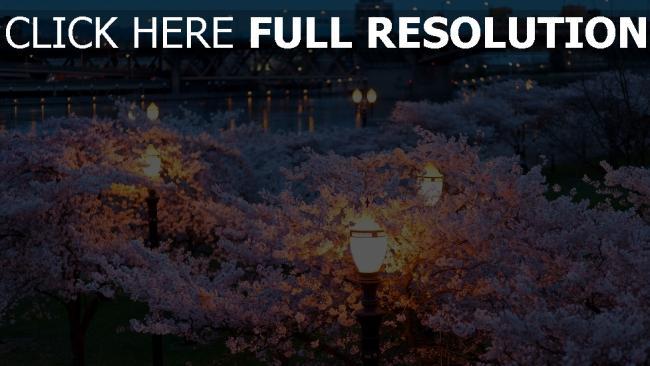 hd hintergrundbilder frühling brücken abend blume park beleuchtung nacht stadt