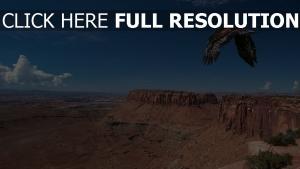 vogel raub klippe canyon flug