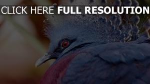 vogel blau augen rote büschel