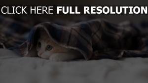 kitten verstecken schnauze blick