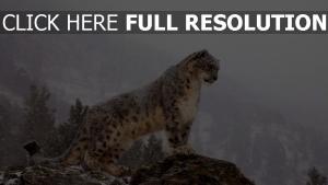 leoparden schnee winter berge