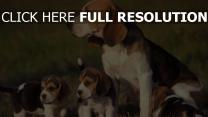 hund welpen gras sitzen