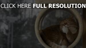 katze rot wäscht fenster winter