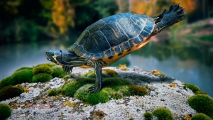 schildkröte schwimmen wasser felsen