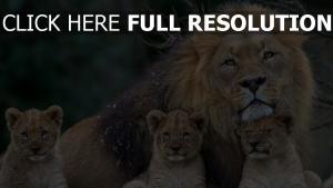 löwen junge familie verwandten