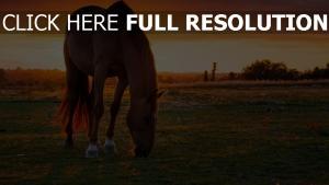 pferd weide sonnenuntergang gras