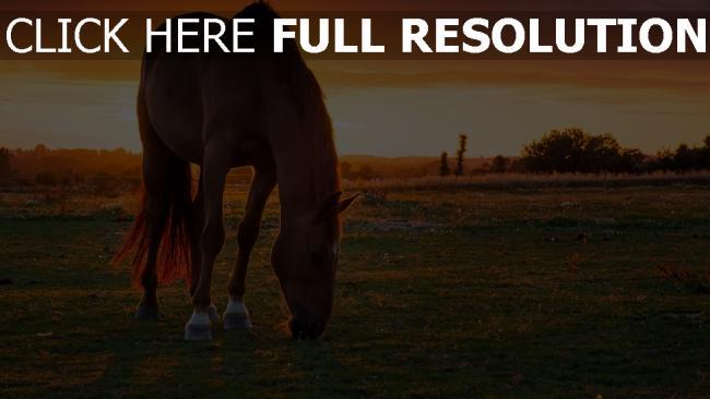 hd hintergrundbilder pferd weide sonnenuntergang gras