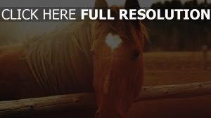 pferd braun mähne sonne licht