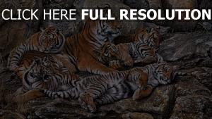 tiger raubtiere familie liegen steine