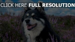 hund feld gras blumen