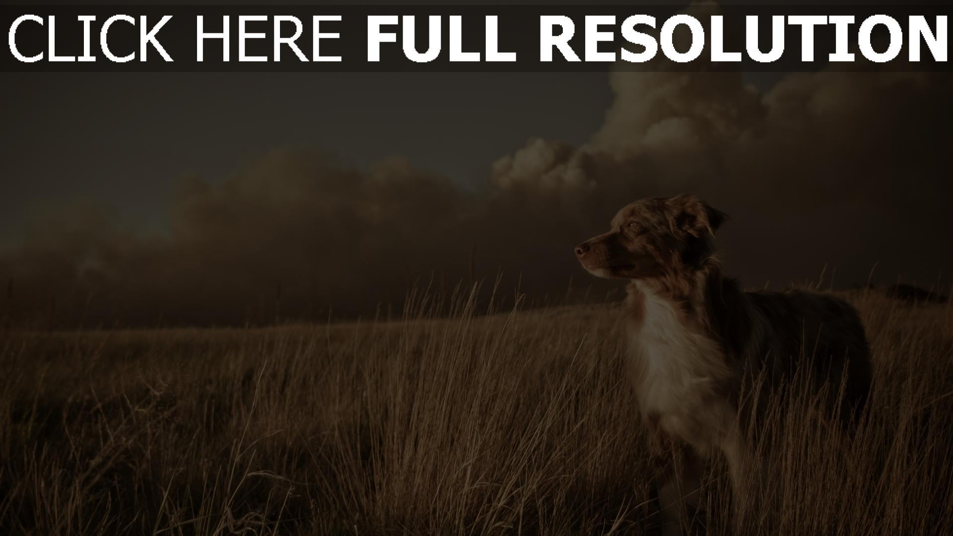X  Dog Kennel