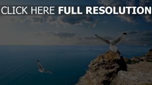 vögel möwen meer felsen fliegen