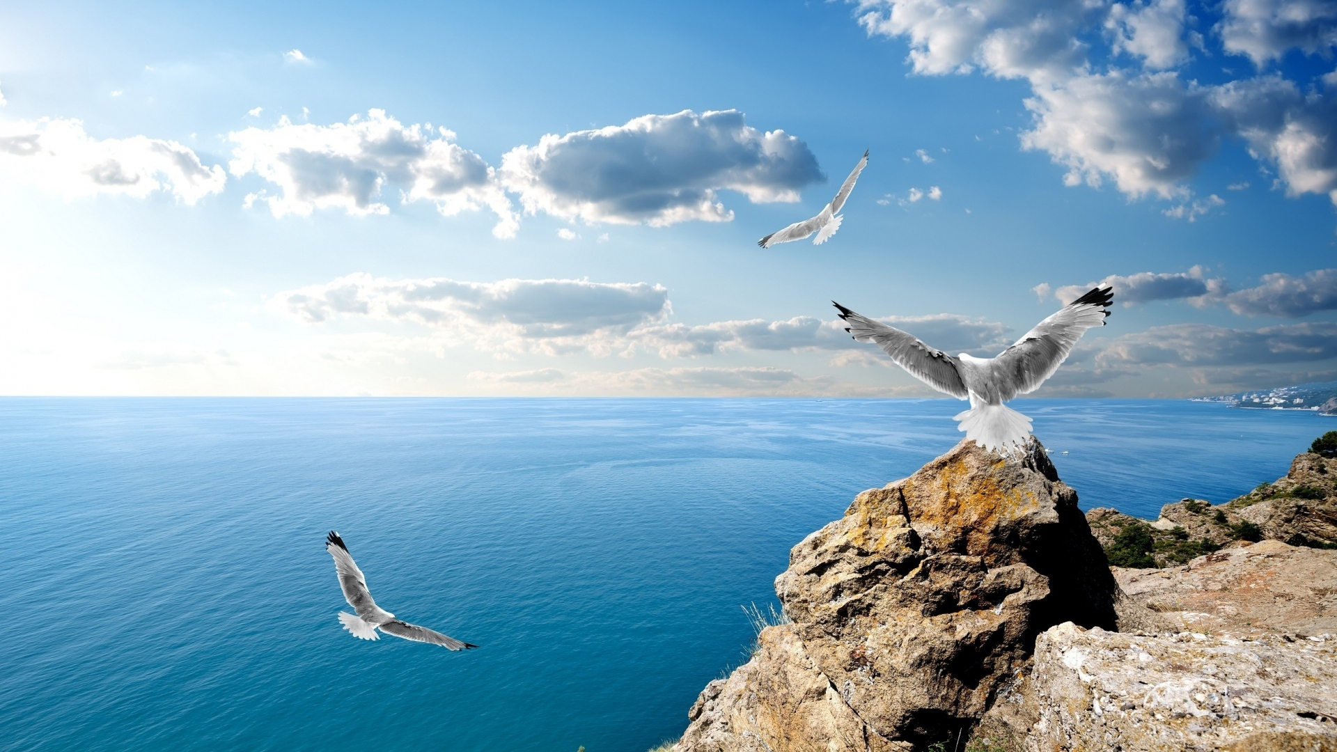 Hd hintergrundbilder v gel m wen meer felsen fliegen for Fliegen in blumen