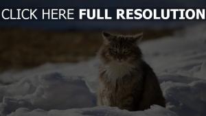 katze flauschige graue schnee winter