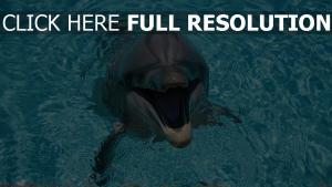 delphin froh wasser blau schwimmen pool