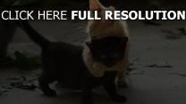 kätzchen zwei hell schwarzes umarmungen