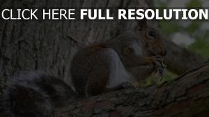 eichhörnchen baum rinde nüsse knabbert