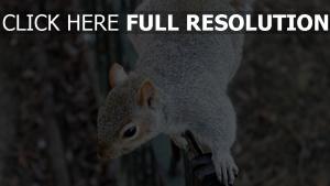 eichhörnchen wolle pfoten nagetier