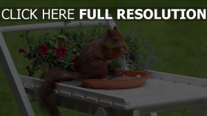 eichhörnchen nüsse lebensmittel blumen tisch