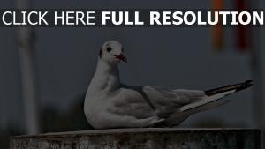 möwe vogel sitzend ufer