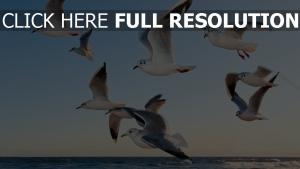 möwen herde vogel fliegen meer horizont