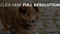 hund pelz flauschige hundehalsband gespielt