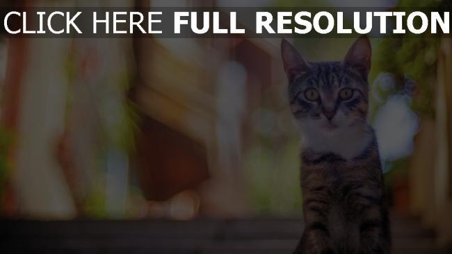 hd hintergrundbilder katze gestreift sitzend überraschung blick hintergrund bokeh