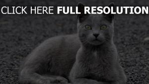 katze grau haar liegen blick