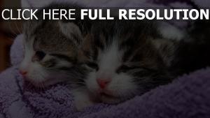 kätzchen kinder paar schnauzeer