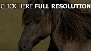 pferd kopf mähne wind